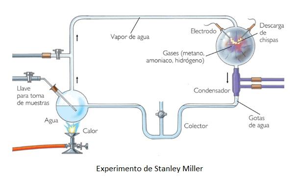 El experimento de stanley miller trabajo valeria for Dining room y sus partes